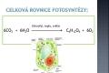 fotosynteza-10