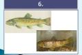 ryby-12