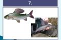 ryby-14