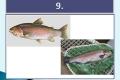 ryby-18