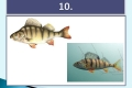 ryby-20