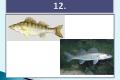 ryby-24