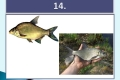 ryby-28