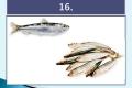 ryby-32