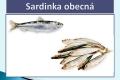 ryby-33