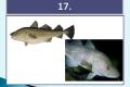 ryby-34