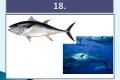 ryby-36