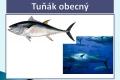 ryby-37