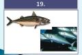 ryby-38