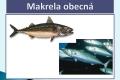ryby-39