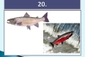 ryby-40