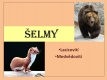 selmy-42