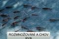 rozmnozovani-ryb-01