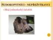 sudokopytnici-03