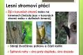 ptáci lesní - 02