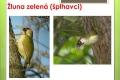 ptáci lesní - 05