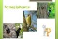 ptáci lesní - 06
