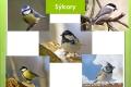 ptáci lesní - 09