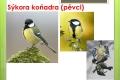 ptáci lesní - 10