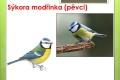 ptáci lesní - 11