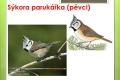 ptáci lesní - 12