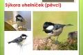 ptáci lesní - 13