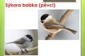 ptáci lesní - 14