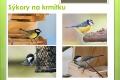 ptaci-lesni-15