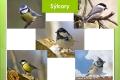 ptáci lesní - 18