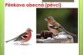 ptáci lesní - 19