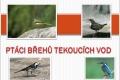 ptáci břehů tekoucích vod-01