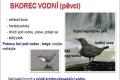 ptáci břehů tekoucích vod-02