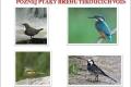 ptáci břehů tekoucích vod-07