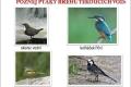 ptáci břehů tekoucích vod-08