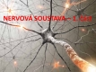 nervová soustava-1-01