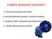 nervová soustava-1-03