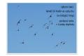 ptáci otevřené krajiny-04