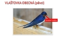 ptáci otevřené krajiny-06