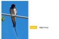 ptáci otevřené krajiny-07