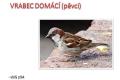 ptáci otevřené krajiny-13