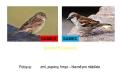 ptáci otevřené krajiny-14