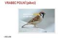ptáci otevřené krajiny-16