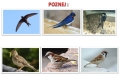 ptáci otevřené krajiny-18