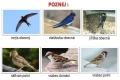 ptáci otevřené krajiny-19