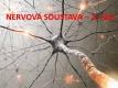 nervová soustava-2-01