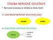 nervová soustava-2-02