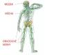 nervová soustava-2-03