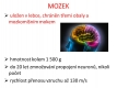 nervová soustava-2-04