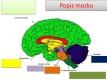 nervová soustava-2-05