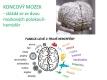 nervová soustava-2-06